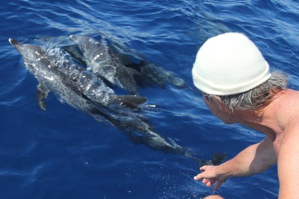 Delphintherapie, Delfintherapie